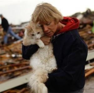 tornado cat